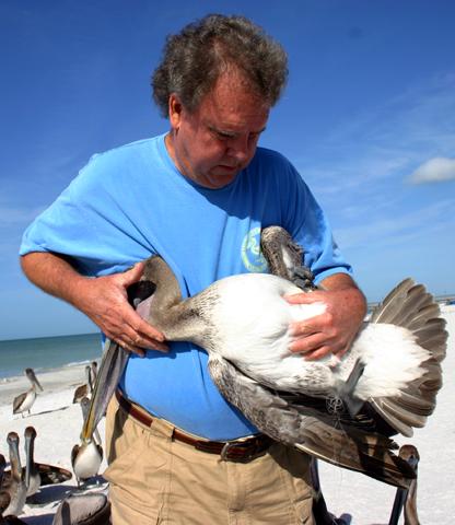 Mit gekonntem Griff untersucht Ralph Heath einen angeschlagenen Pelikan. (Foto Karsten-Thilo Raab)