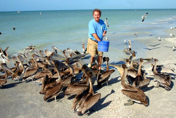 Am Strand von Indiana Shores lässt es sich Ralph Heath nicht nehmen, täglich einige Pelikane zu füttern. (Foto Karsten-Thilo Raab)