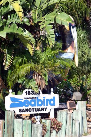 Die etwas andere Attraktion in Florida: das Seabird Sunctory in Indiana Shores. (Foto Karsten-Thilo Raab)