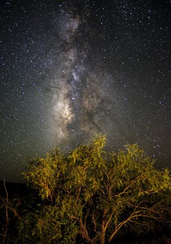 Nahezu komplett frei von künstlichem Licht, bietet der Big Bend National Park ideale Bedingungen für die Beobachtung des nächtlichen Himmels.