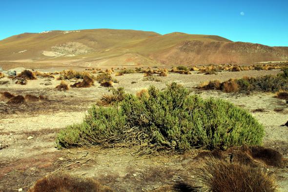 Normalerweise finden sich in der Atacama-Wüste in Chile neben Sand, Geröll und Steinen allenfalls ein paar Büsche und Sträucher. (Foto Karsten-Thilo Raab)