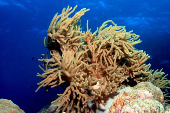 Die Unterwasserwelt am Baa Atoll gilt als besonders artenreich.