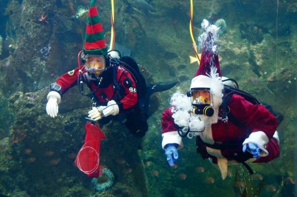 Im Seattle Aquarium geht der Weihnachtsmann ab dem 28. November bis zum 20. Dezember 2015 immer samstags und sonntags im wahrsten Sinne des Wortes auf Tauchstation. (Foto Seattle Aquarium)