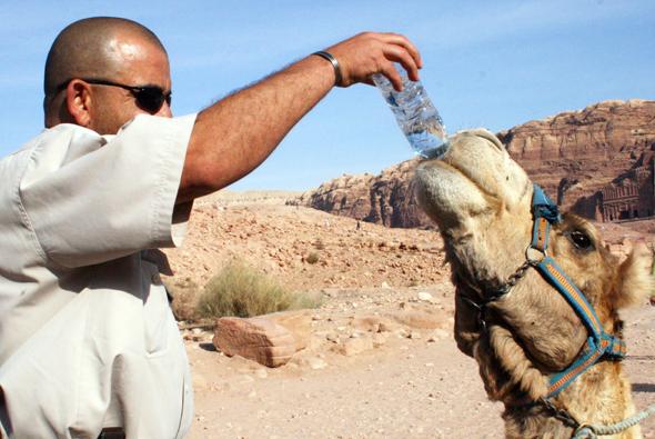 Nicht nur Kamele und Dromedare wissen, dass regelmäßige Flüssigkeitszufuhr überaus wichtig ist. (Foto Karsten-Thilo Raab)