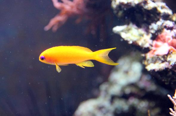 """Die bunten Fische und Korallen verleihen dem """"größten Aquarium der Welt"""" etwas einzigartiges. (Foto Karsten-Thilo Raab)"""