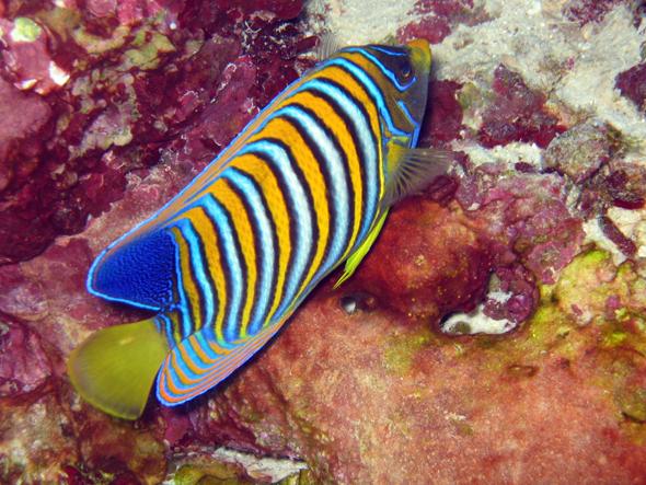Die bunte Wasserwelt des Great Barrier Reefs ist je nach Lichteinfall absolut atemberaubend.