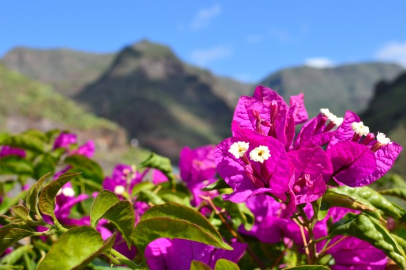Malerisches Fleckchen auf den Kanaren: das Valle Gran Rey auf der Insel La Gomera. (Foto Andreas Hermsdorf/Pixelio)