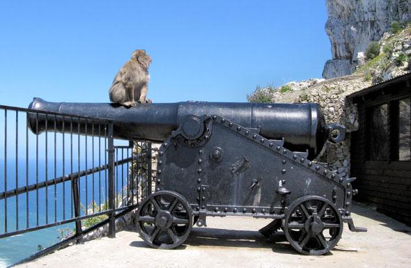 Die Affen gehören ebenso wie der berühmte Felsen, The Rock, zu Gibraltar. (Foto Bildpixel/Pixelio)
