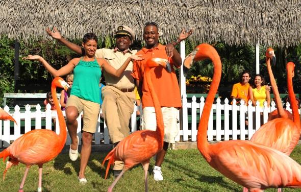 Prächtige Flamingos gehören zu den Blickfängen im Ardastra Gardens, Zoo & Conservation Centre (Foto Nassau Paradise Island)