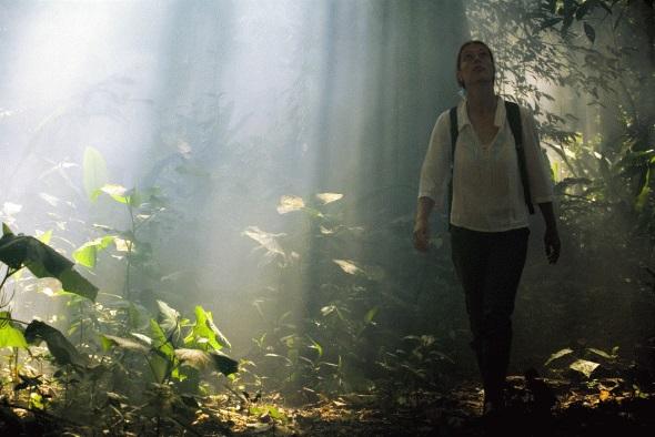 Im dichten Regenwald des Amazonsgebiet dringt teilweise nur wenig licht durch die Baumkronen. (Foto Procolombia)