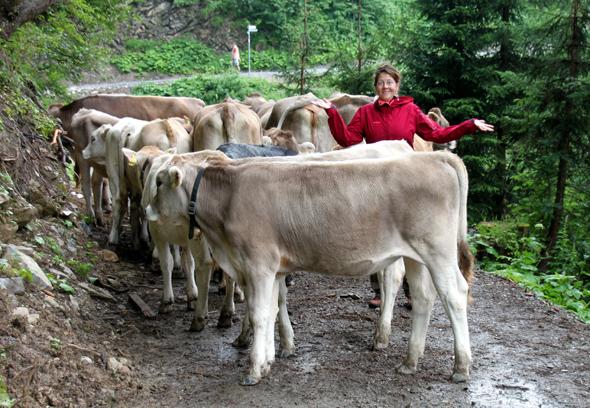 Nicht immer sind Begegnungen mit Kühen so harmlos wie hier bei Kuhschwab. In der Schweiz wurde eine Touristin totgetrampelt. (Foto Karsten-Thilo Raab)