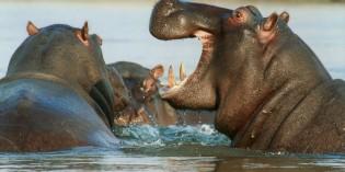 Faszinierende Artenvielfalt in Namibia