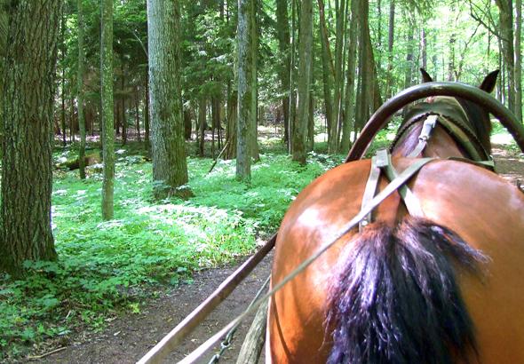 Herrlich entspannend: eine nostalgische Kutschfahrt zum Nationalpark Bialowieski.