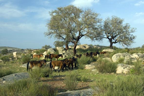 Die wildromantische Landschaft der Faia Bravo im Centro de Portugal.