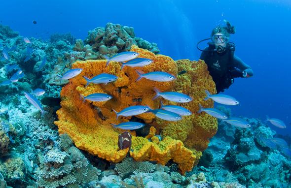 Ein buntes Kaleidoskop der Unterwasserwelt erwartet Taucher vor Papua Neuguinea: (Fotos PNG Tourism Promotion Authority)