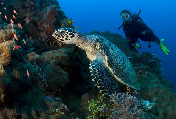 17.000 Kilometer Küstenlinie und 45.000 Quadratkilometer Riffsysteme können Taucher in diesem Teil der Erde erkunden.