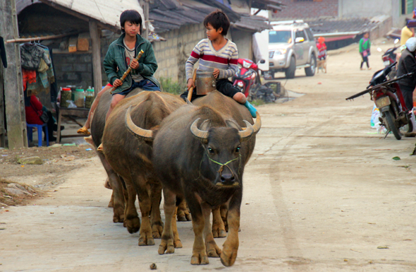Entspannt reiten diese Kinder in Ta Van auf Wasserbüffeln. (Foto Karsten-Thilo Raab)