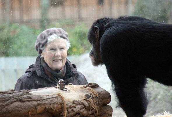 Sehen und gesehen werden, ist das Motto von Mensch und Tier in Karsruhe. (Foto Karsten-Thilo Raab)