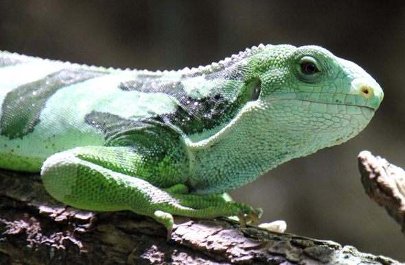 Reptilien, Amphibien und Fische aus allen Kontinenten sind im Exotenhaus zu finden. (Foto Karsten-Thilo Raab)