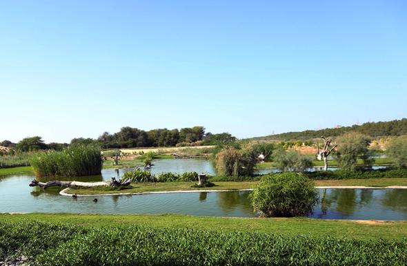 Auf 450 Hektar Fläche beheimatet das Naturschutzgebiet fast 350 Vogelarten.
