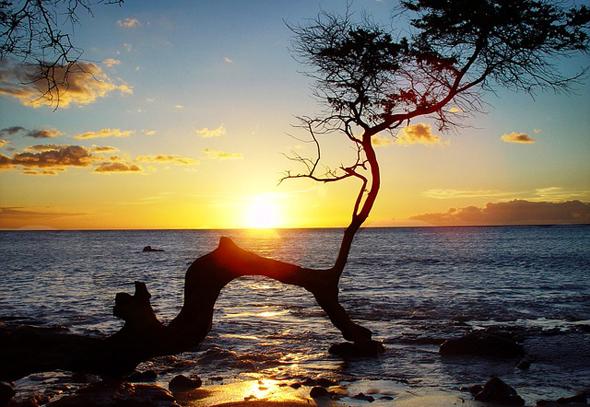 Inseltraum im Pazifik: das von der Sonne verwöhnte Hawaii.