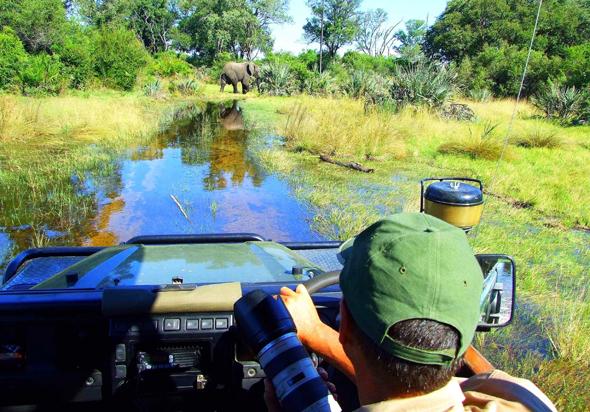 Wildness mit atemberaubenden Naturerlebnissen: Elefant im Schilfkanalbei Kwetsani. (Foto Katharina Büttel)