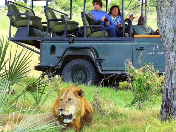 Ein Motiv wie aus dem Bilderbuch: ein Löwe liegt faul im Gras und interssiert sich wenig für den Safari-Jeep. (Foto Katharina Büttel)