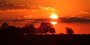 Botswana – ein stattlicher Löwe zum Abschied