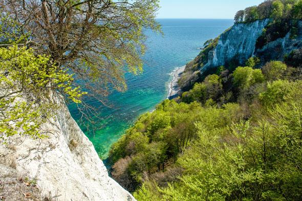 Am Königsstuhl konkurriert das Grün der Bäume mit dem blau-grün schillernden Wasser der Ostsee. (Foto: Lehmann)
