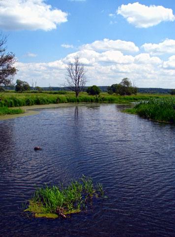 Im weitläufigen Unteren Odertal finden Urlauber viel Ruhe in der Natur. (Foto: djd)