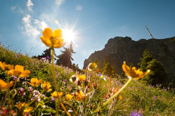 Besonders im Frühjahr ist das Wandern wie hier am Kitzbpheler Horn ein Genuss. (Foto TVB Kitzbüheler Alpen)