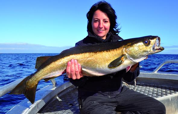 Für Angler gilt Norwegen ob seiner riesigen Fischbestände als das gelobte Land. (Foto André Joszko)