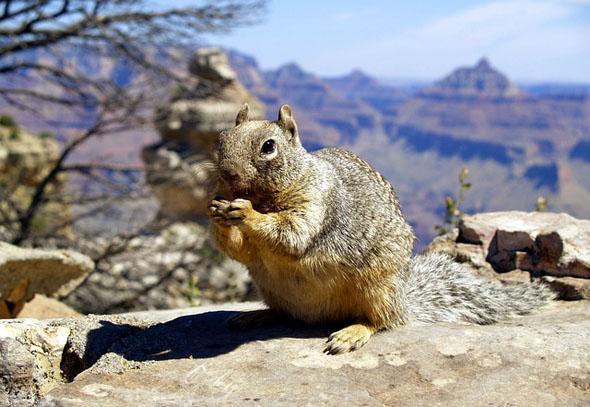 Possierliche Nager tummeln sich in diesem Teil von Arizona.