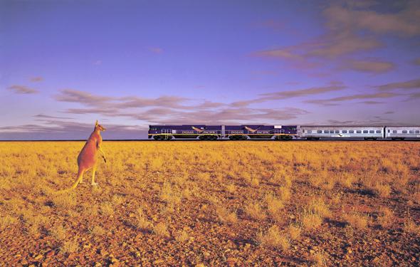 Auch der Indian Pacific rollt durch diesen Teilen Australiens - was den Beuteltieren nicht verborgen bleibt. (Foto Tourism Western-Australia)