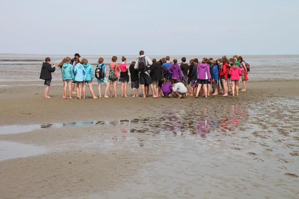 Auf einer Wattwanderung kann man das Weltnaturerbe Wattenmeer und seine Bewohner näher kennen. (Foto: djd)