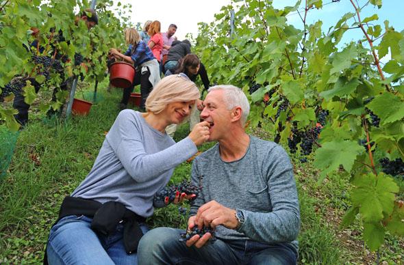 Neues in Sachen Weinbau erleben: Viele Jungwinzer treten gerade den Generationenwechsel in ihren Betrieben an und setzen auf neue Ideen und neue Herangehensweisen. (Foto: djd)