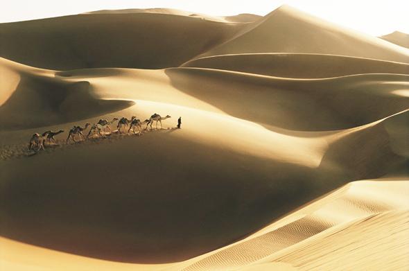 Wüstentraum in Abu Dhabi: Begegnungen mit Kamelen.