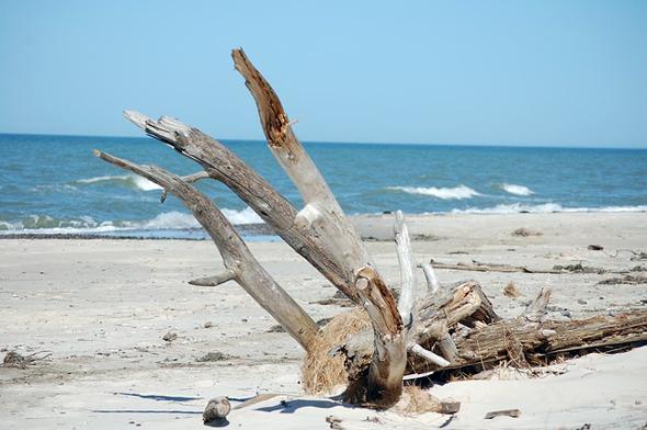 Äste und Holzstücke werden gerade in der stürmischen Jahreszeit nicht selten angespült.