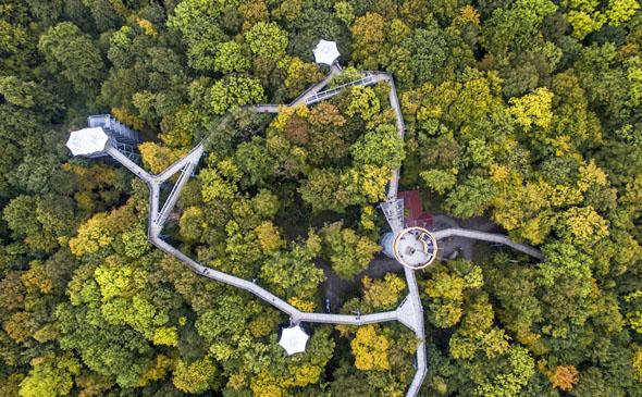 Der Baumkronenpfad schlängelt sich in zwei Schleifen mit einer Länge von 238 und 308 Metern durch die Wipfel. (Foto: djd)