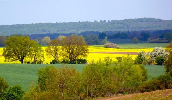 Traumhafte Aussichten entlang des Naturparkweges: die Landschaft bei Eickelberg. (Foto Martin Simon)