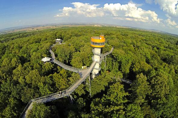 Im Hainich befindet sich der höchste Baumkronenpfad Deutschlands. Einen tollen Ausblick bietet dort der 44 Meter hohe Baumturm mit Baumhaus. (Foto: Aaron Moser)