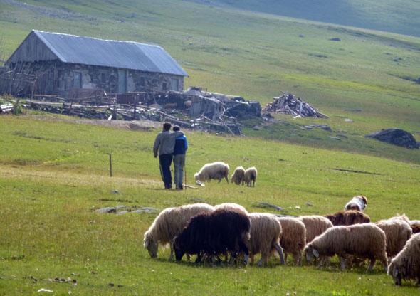 Auch tierische Begegnungen sind auf den Peaks of the Balkans nichts Ungewöhnliches - wie hier in Doberdol. (Foto Jan Dohren)