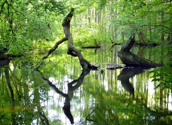 """Wildromantische """"Waldskulpturen"""" im Nebel Durchbruchstal. (Foto Martin Simon)"""
