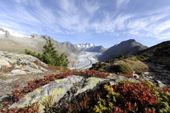 Wunderbar wanderbar: der Große Aletschgletscher von Moosfluh aus gesehen. (Fotos Valais Wallis Promotion)