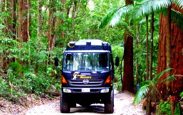 Gigant zwischen Baumgiganten: unterwegs mit dem Super-LKW im Regenwald. (Foto Katharina Büttel)