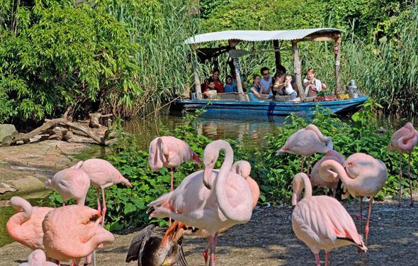 Auf dem Sambesi-Boot, das durch die Afrika-Landschaft im Zoo gleitet, gibt es auch Rollstuhlplätze. (Foto: djd)