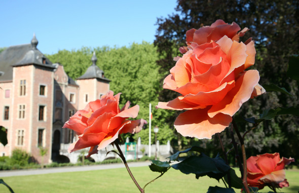 In den Gärten von Schloss Coloma lassen sich noch bis Ende September Tausende Rpsen bewundern. (Foto Foto Luc Bohez)