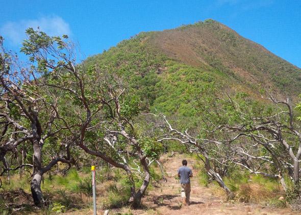 Der Dreaming Track führt am Mount Saunders entlang. (Foto Balkanu)
