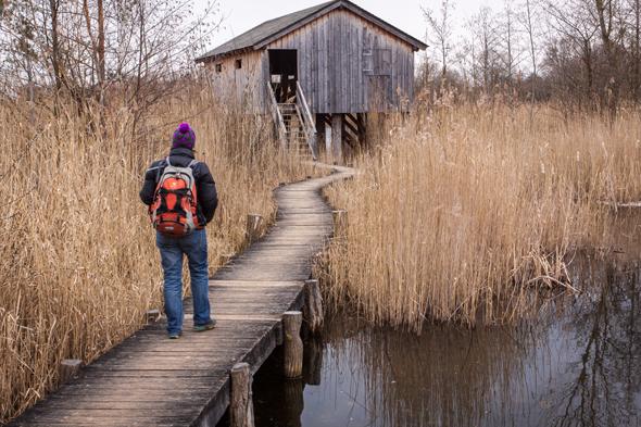Haff Remerschen in der Region Mosel: Über Stege durchs Vogelschutzgebiet. (Foto Astrid Holler)