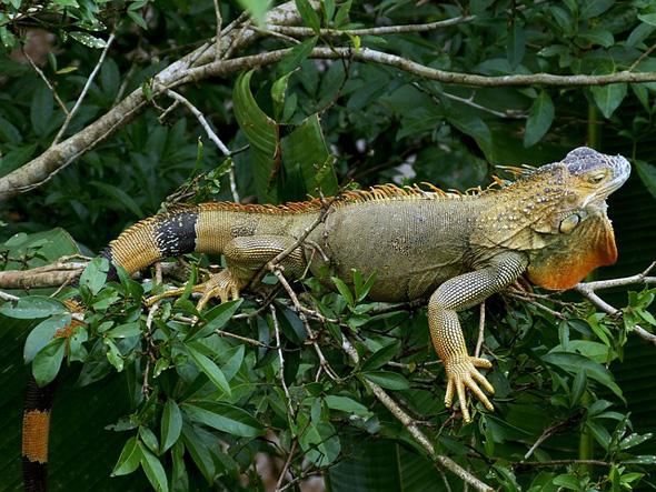 Nicht nur exotische Tiere finden in Costa Rica ideale Lebensbedingungen - hier leben auch die ältesten Menschen.